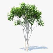 橘子树01 3d model