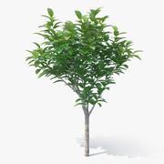 Küçük Ağaç 3D Model 3d model