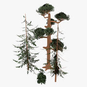 Pines Forest 3d model