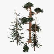 소나무 숲 3d model