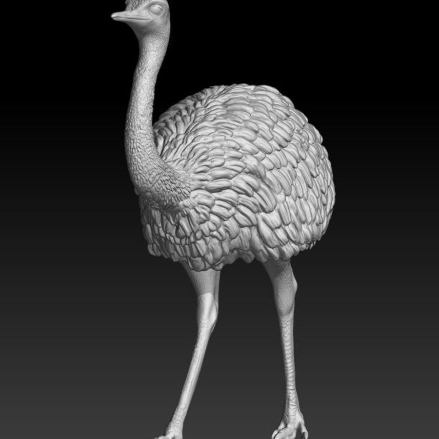 Rhea choique royalty-free 3d model - Preview no. 3