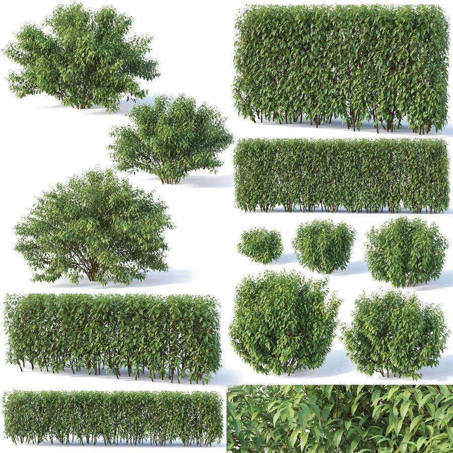 Forsítia 8 arbustos + 2 sebes royalty-free 3d model - Preview no. 1