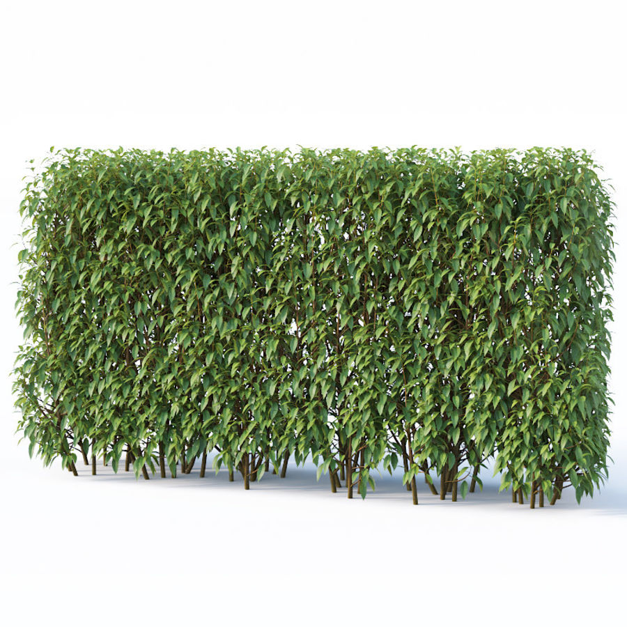 Forsítia 8 arbustos + 2 sebes royalty-free 3d model - Preview no. 7