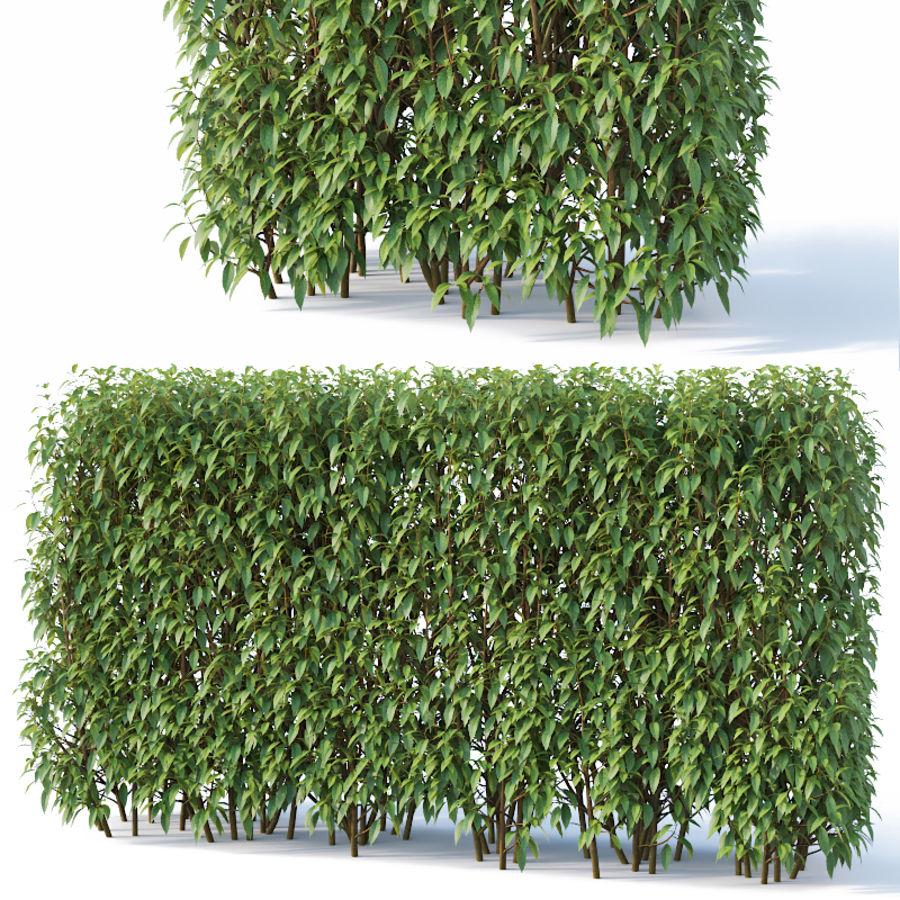 Forsítia 8 arbustos + 2 sebes royalty-free 3d model - Preview no. 6