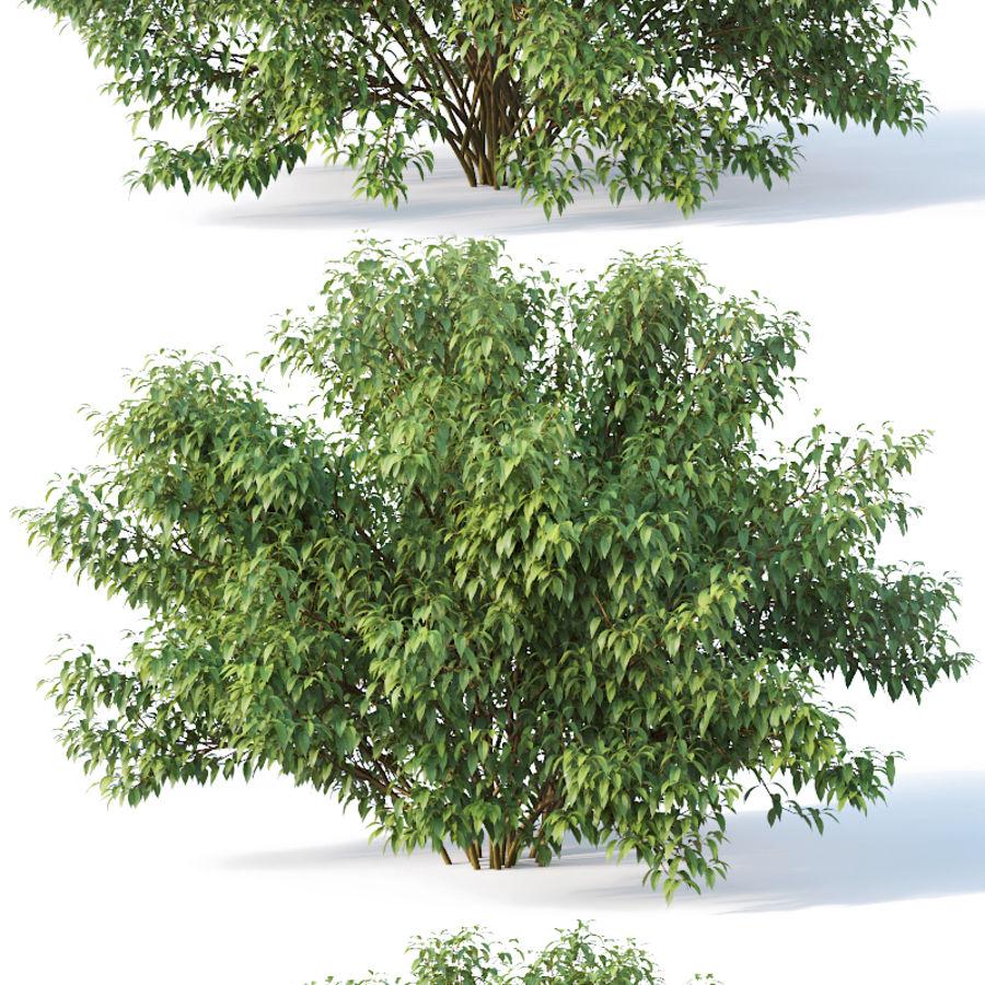Forsítia 8 arbustos + 2 sebes royalty-free 3d model - Preview no. 5