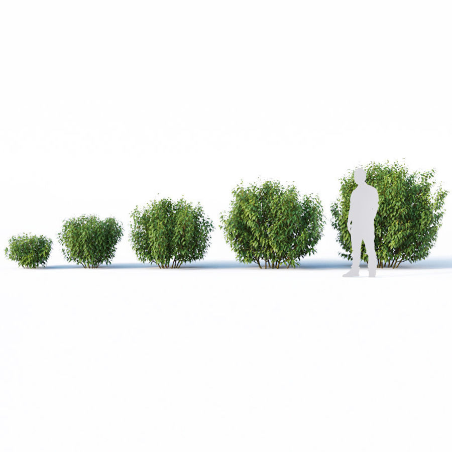 Forsítia 8 arbustos + 2 sebes royalty-free 3d model - Preview no. 10