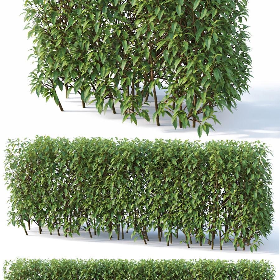 Forsítia 8 arbustos + 2 sebes royalty-free 3d model - Preview no. 4
