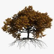 Oak Autumn 2 3d model