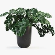 몬스 테라 잎 3d model