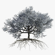Eiche Winter 2 3d model