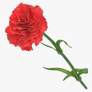 Carnation - Red 3d model