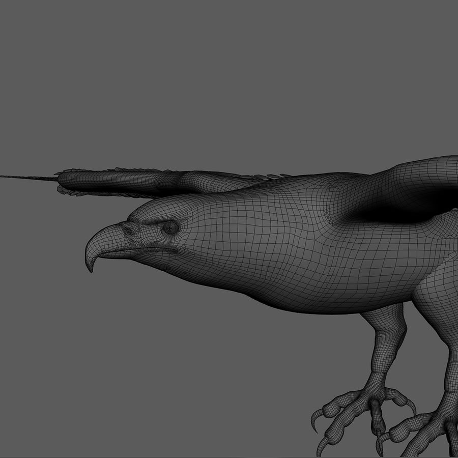 3D Bald Eagle American Rigged Model royalty-free 3d model - Preview no. 18