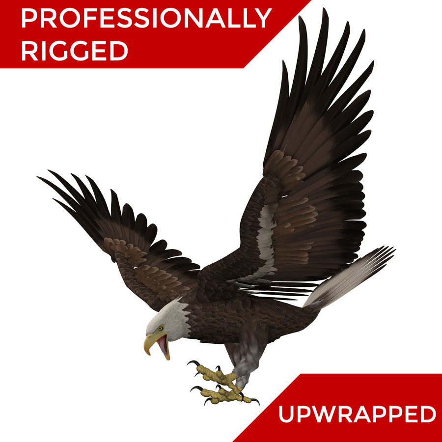 3D Bald Eagle American Rigged Model royalty-free 3d model - Preview no. 1