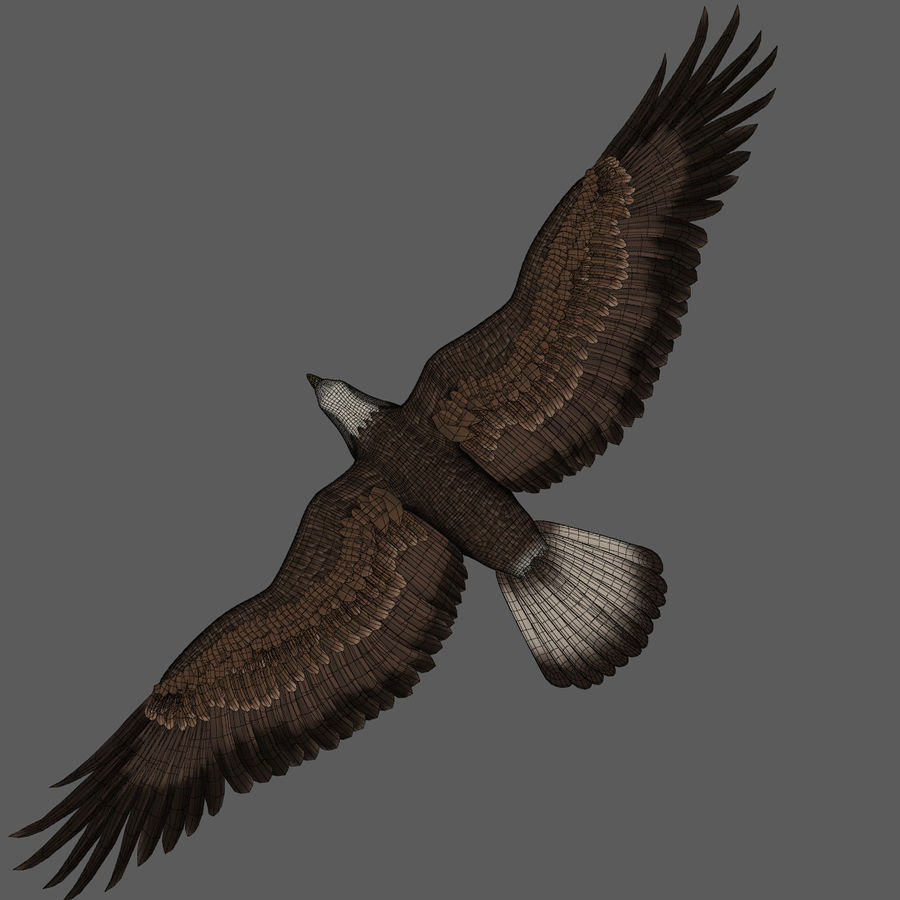 3D Bald Eagle American Rigged Model royalty-free 3d model - Preview no. 17