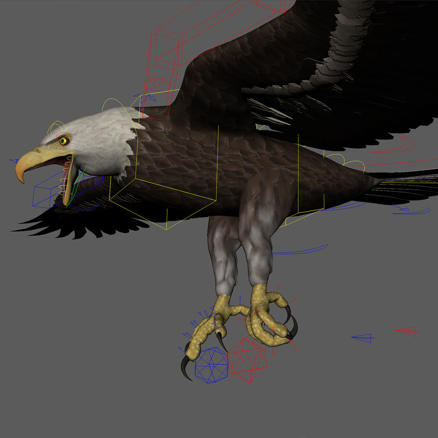 3D Bald Eagle American Rigged Model royalty-free 3d model - Preview no. 3