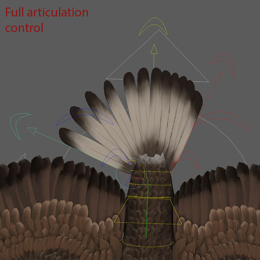 3D Bald Eagle American Rigged Model royalty-free 3d model - Preview no. 6