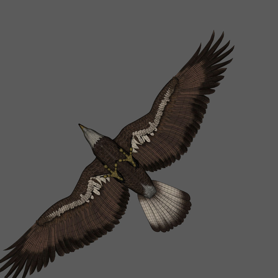 3D Bald Eagle American Rigged Model royalty-free 3d model - Preview no. 7