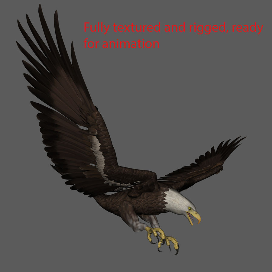3D Bald Eagle American Rigged Model royalty-free 3d model - Preview no. 11