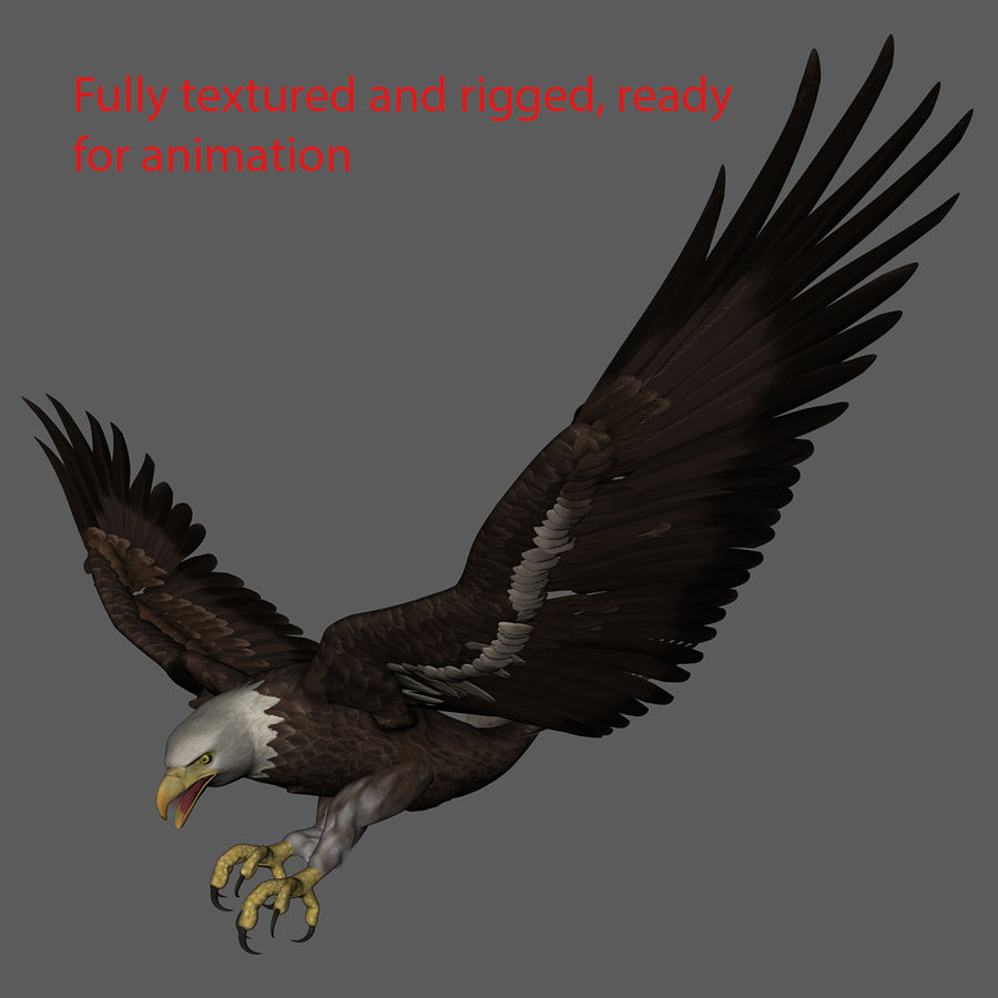 3D Bald Eagle American Rigged Model royalty-free 3d model - Preview no. 9