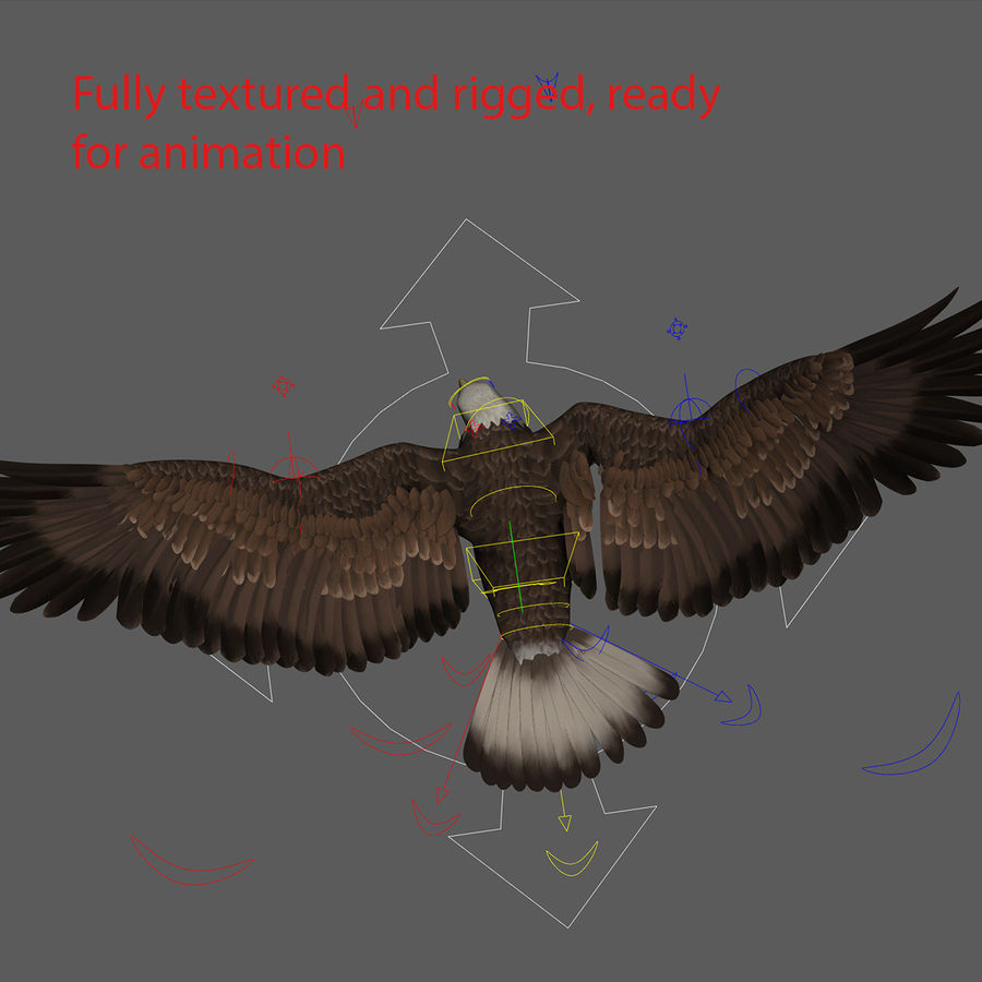 3D Bald Eagle American Rigged Model royalty-free 3d model - Preview no. 12