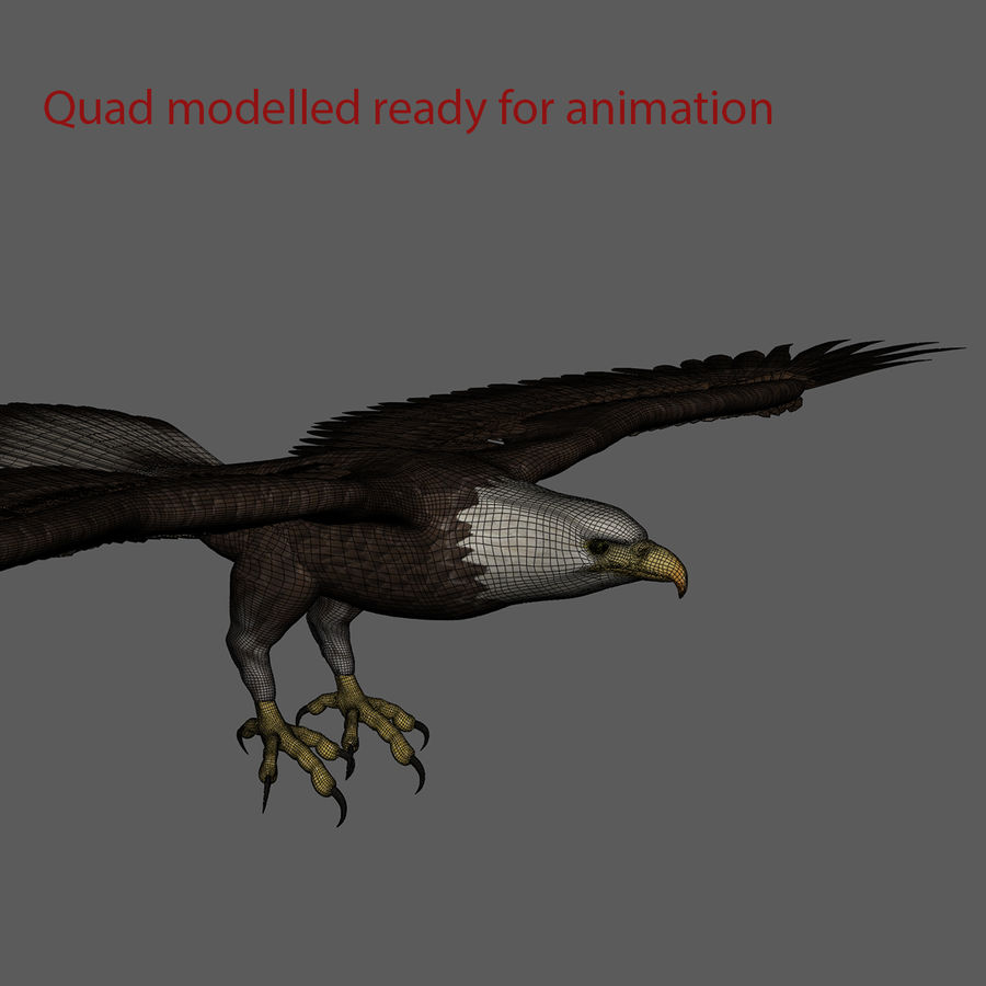 3D Bald Eagle American Rigged Model royalty-free 3d model - Preview no. 8
