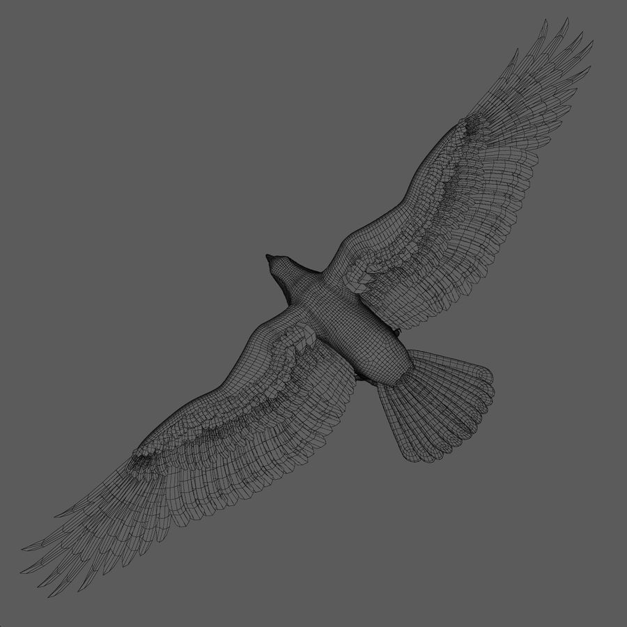 3D Bald Eagle American Rigged Model royalty-free 3d model - Preview no. 21