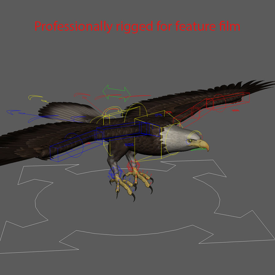 3D Bald Eagle American Rigged Model royalty-free 3d model - Preview no. 15