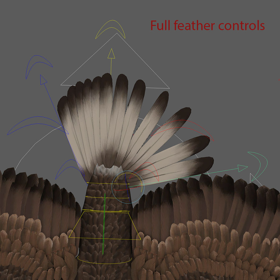 3D Bald Eagle American Rigged Model royalty-free 3d model - Preview no. 5