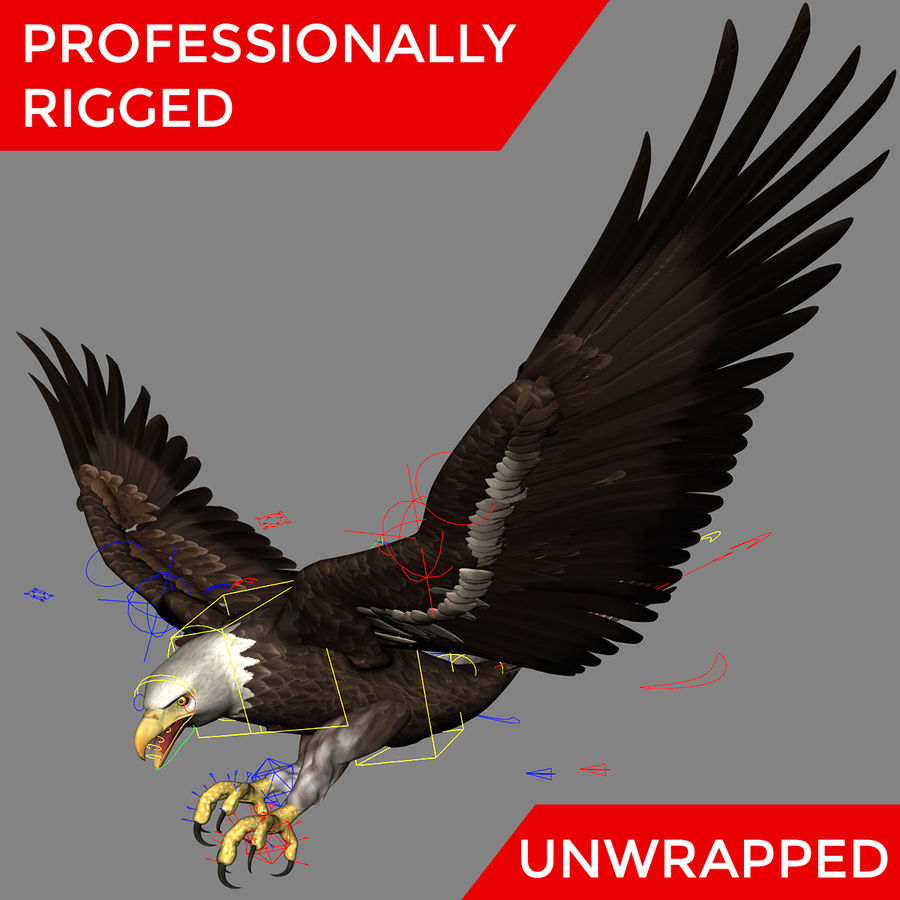 3D Bald Eagle American Rigged Model royalty-free 3d model - Preview no. 2