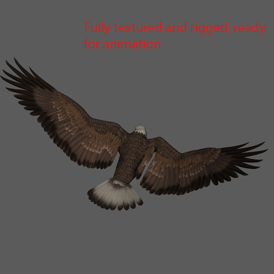 3D Bald Eagle American Rigged Model royalty-free 3d model - Preview no. 10