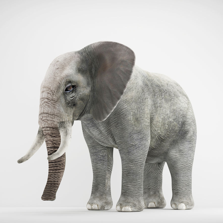 Elephant 3d realistic model royalty-free 3d model - Preview no. 4