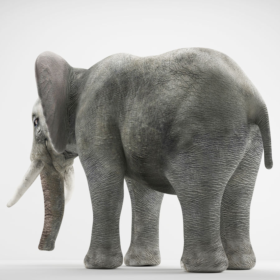 Elephant 3d realistic model royalty-free 3d model - Preview no. 3