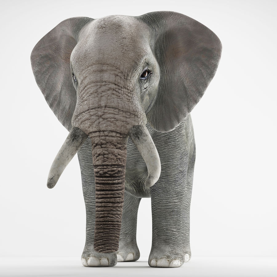 Elephant 3d realistic model royalty-free 3d model - Preview no. 2