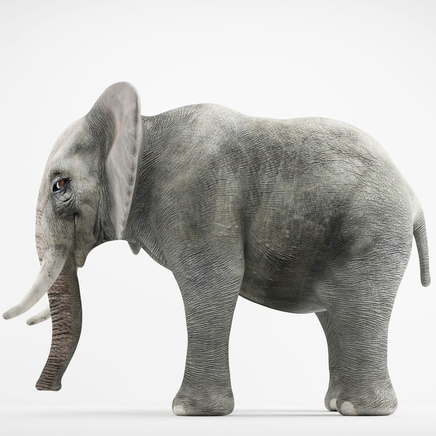 Elephant 3d realistic model royalty-free 3d model - Preview no. 1