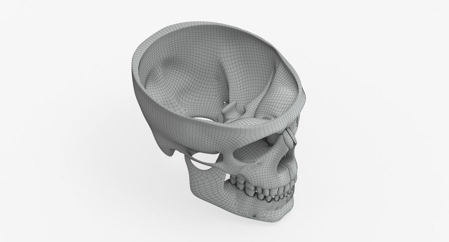 Skull Anatomy royalty-free 3d model - Preview no. 14