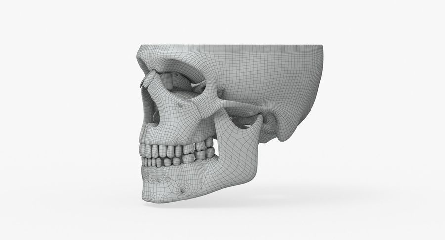 Skull Anatomy royalty-free 3d model - Preview no. 15