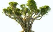 日本树动画 3d model