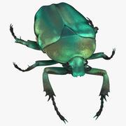 Chrząszcz zielony chrząszcz Walking 02 (1) 3d model