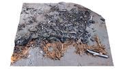 Schelpen en de overblijfselen van hout op het strand scannen 20 3d model