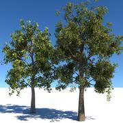Generic Tree 01 3d model