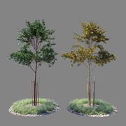 Jeune arbre 02 3d model