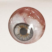 İnsan gözü 3d model