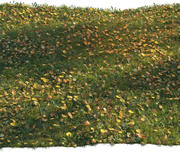 カエデの葉が付いている草 3d model