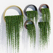 Plantenbakken klimop 3d model