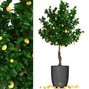 Zitronenbaum mit Obst 3 3d model