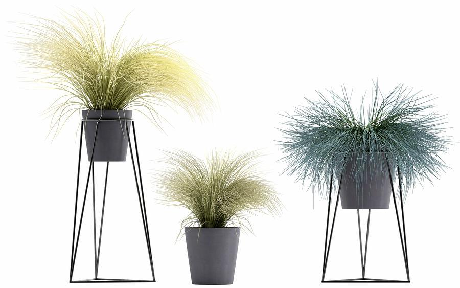 장식용 잔디 식물 royalty-free 3d model - Preview no. 5
