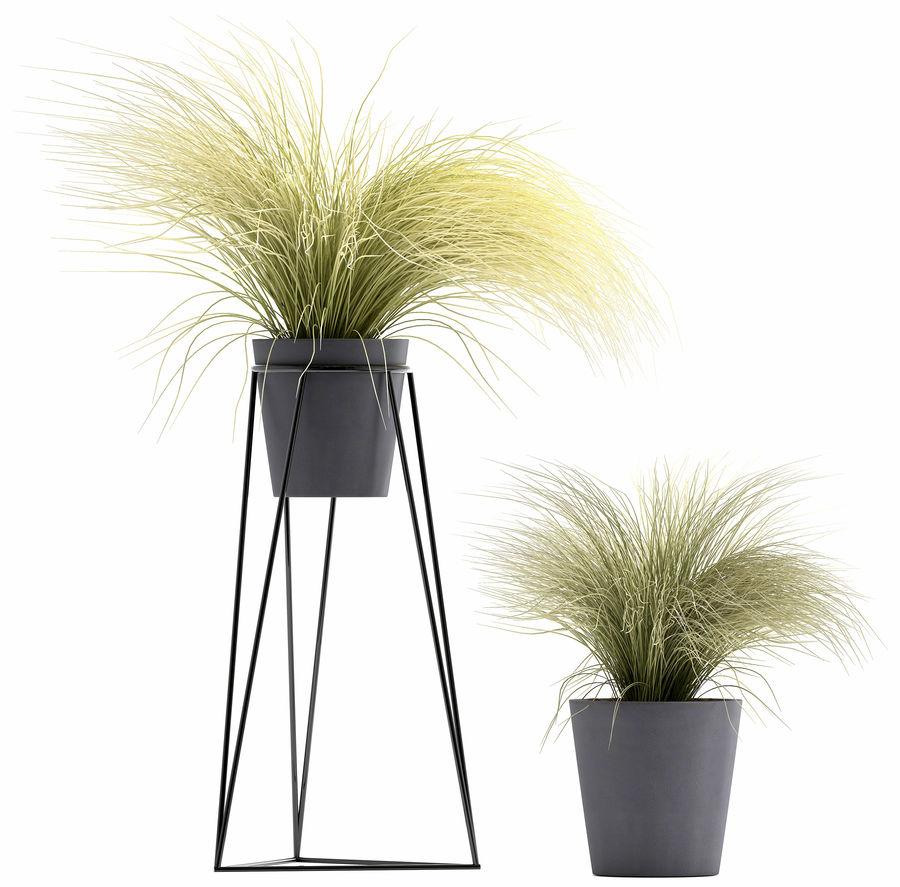 장식용 잔디 식물 royalty-free 3d model - Preview no. 6