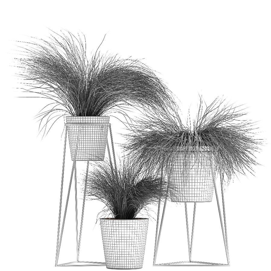 장식용 잔디 식물 royalty-free 3d model - Preview no. 10