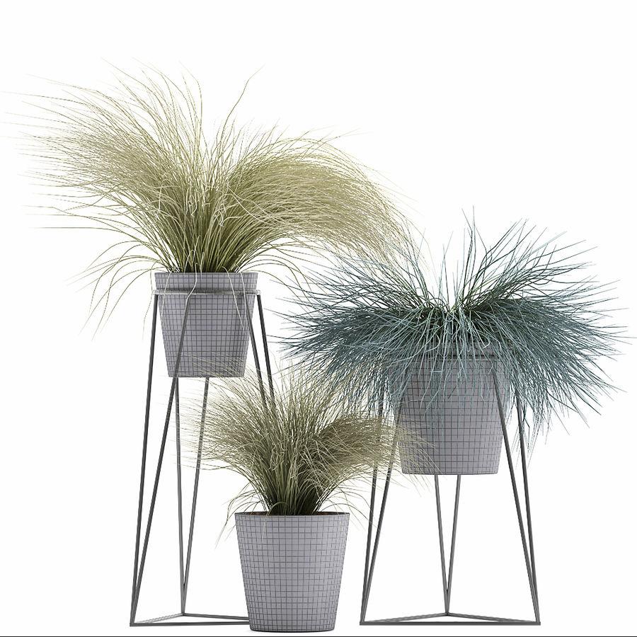 장식용 잔디 식물 royalty-free 3d model - Preview no. 11