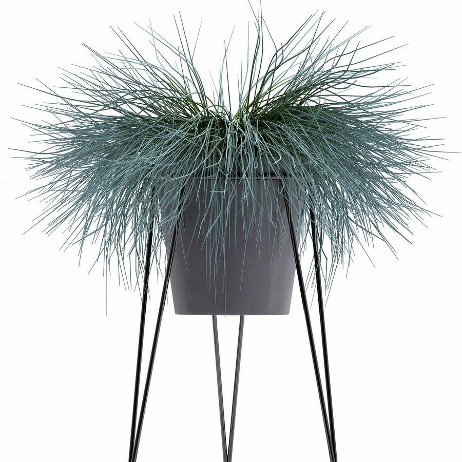 장식용 잔디 식물 royalty-free 3d model - Preview no. 7